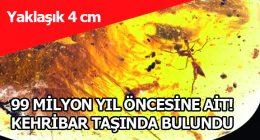 99 MİLYON YIL ÖNCESİNE AİT! KEHRİBAR TAŞINDA BULUNDU