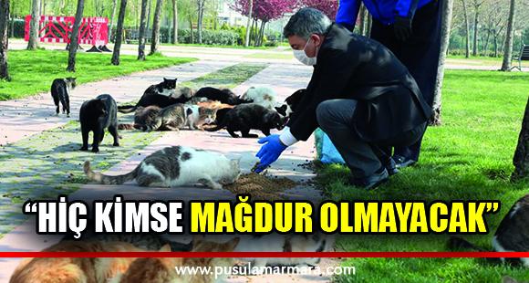 Dilovası'nda, sokak hayvanları unutulmadı - 13 Nisan 2020 13:06