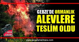 Gaziler Dağında Yangın